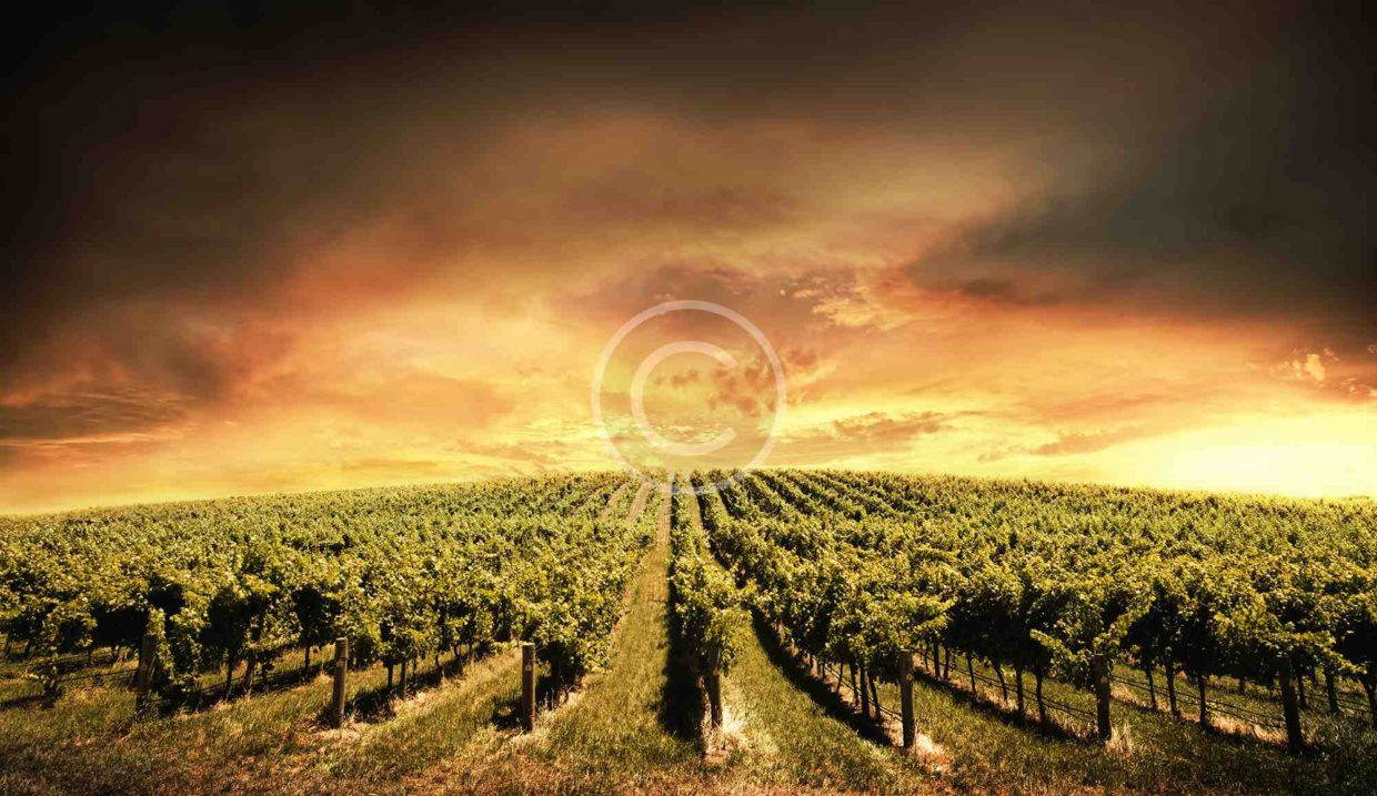 From Sweet to Brut. Short History of Champagne